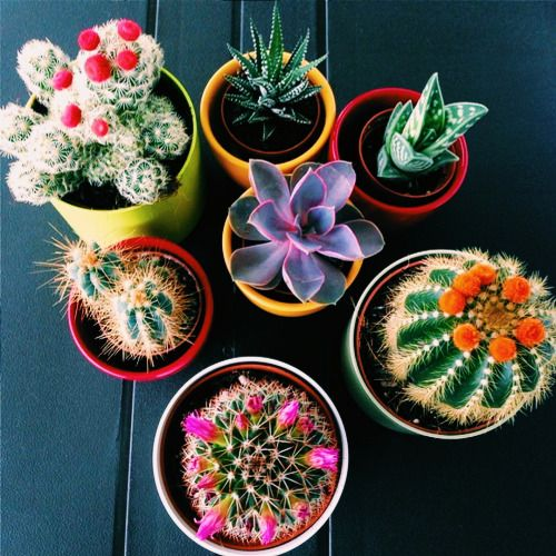 Beautiful Cactus 8