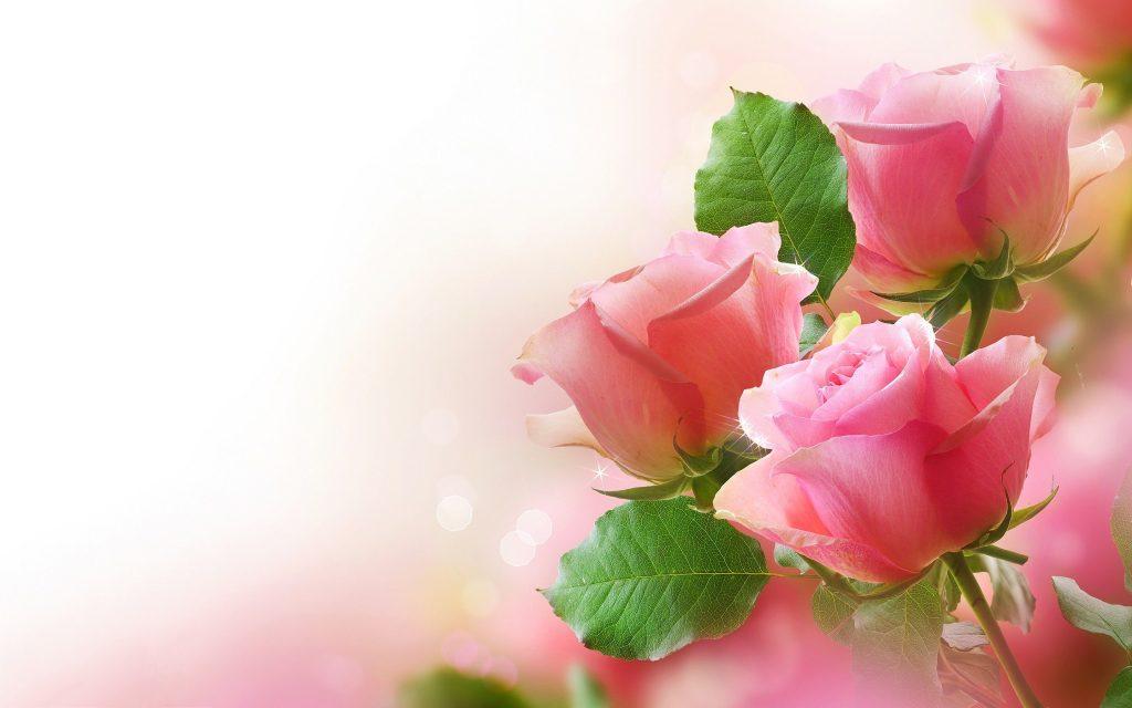 Rose Wallpapers For Desktop