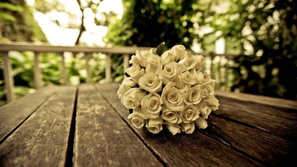 White Rose Desktop Background