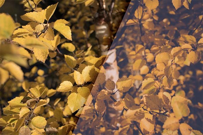 1-vintage-autumn-colors