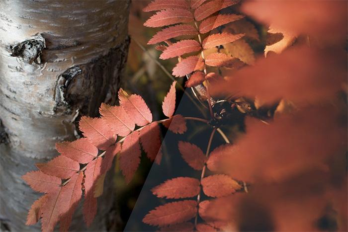 2-vintage-autumn-colors