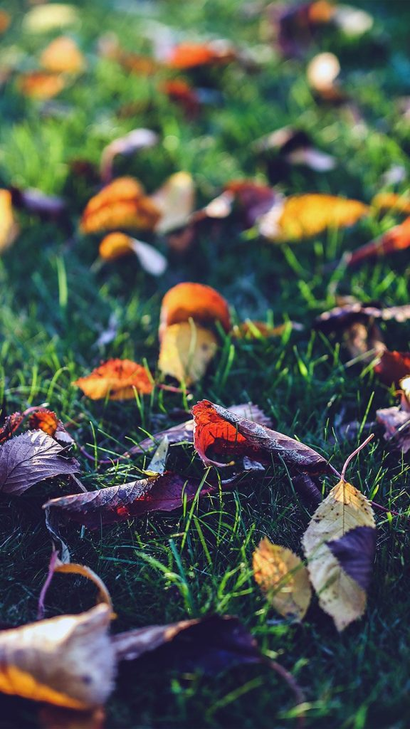 Autumn-Leaf-Floor-Wallpaper