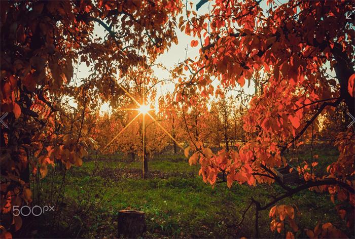 autumn-sunset-by-piotr-przybylski