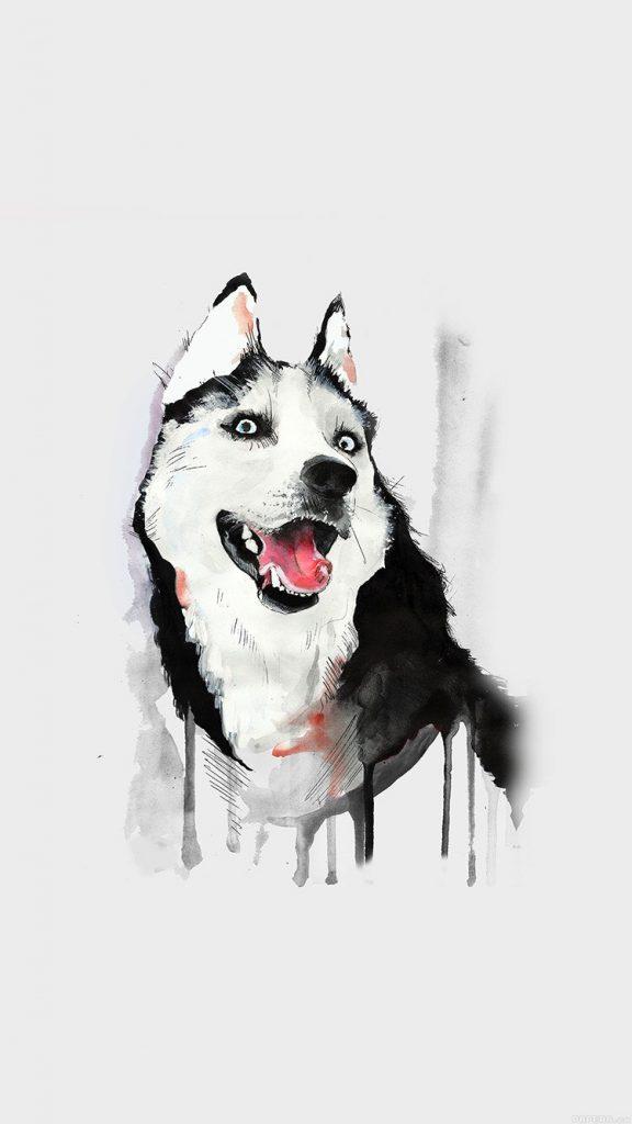 dog-white-husky-animal