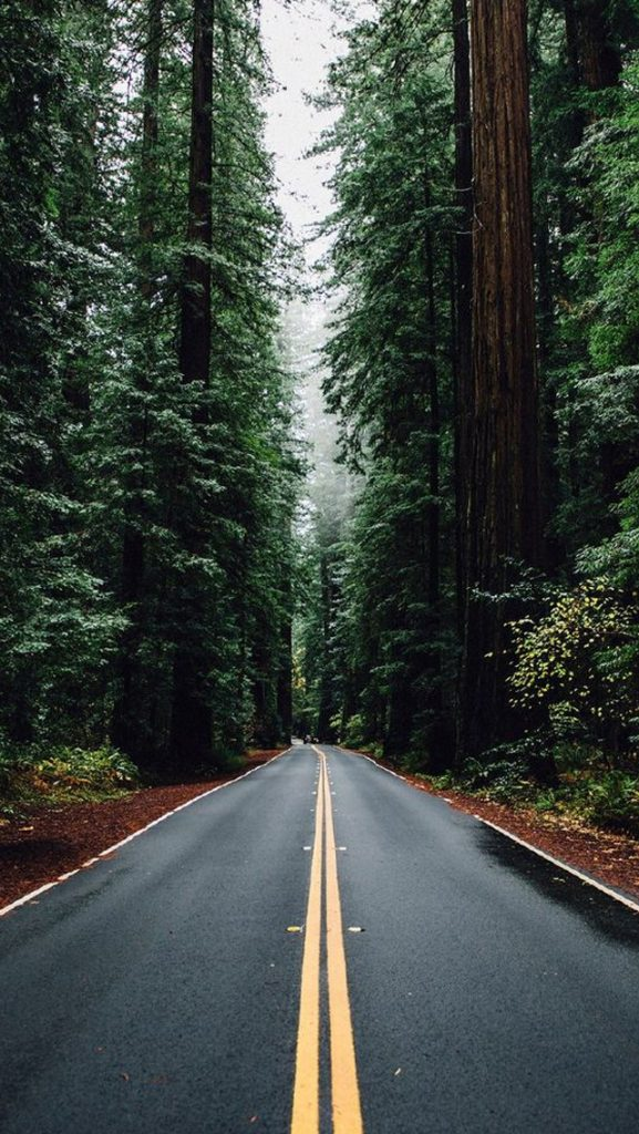 green-forest-road