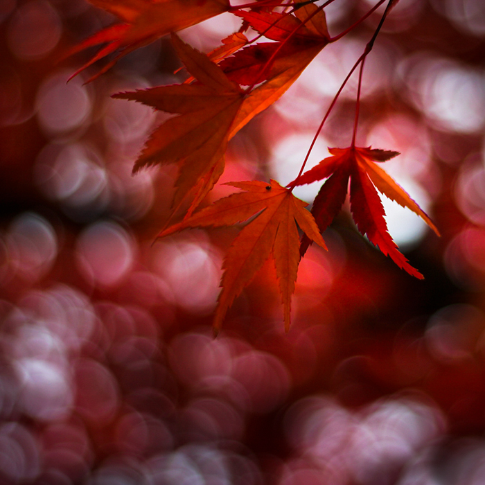red-fall-colors