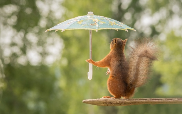 SQUIRREL HOLD A UMBRELLAS FUNNY POSE