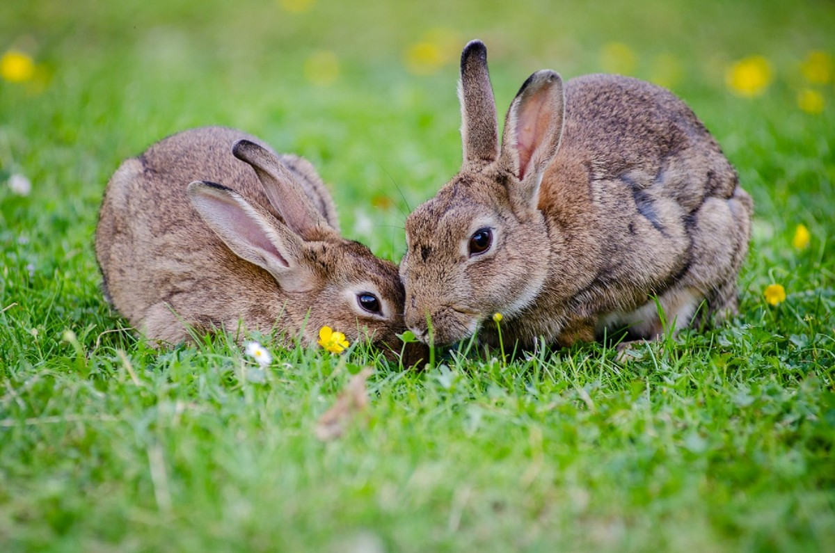bunnies in the grass image