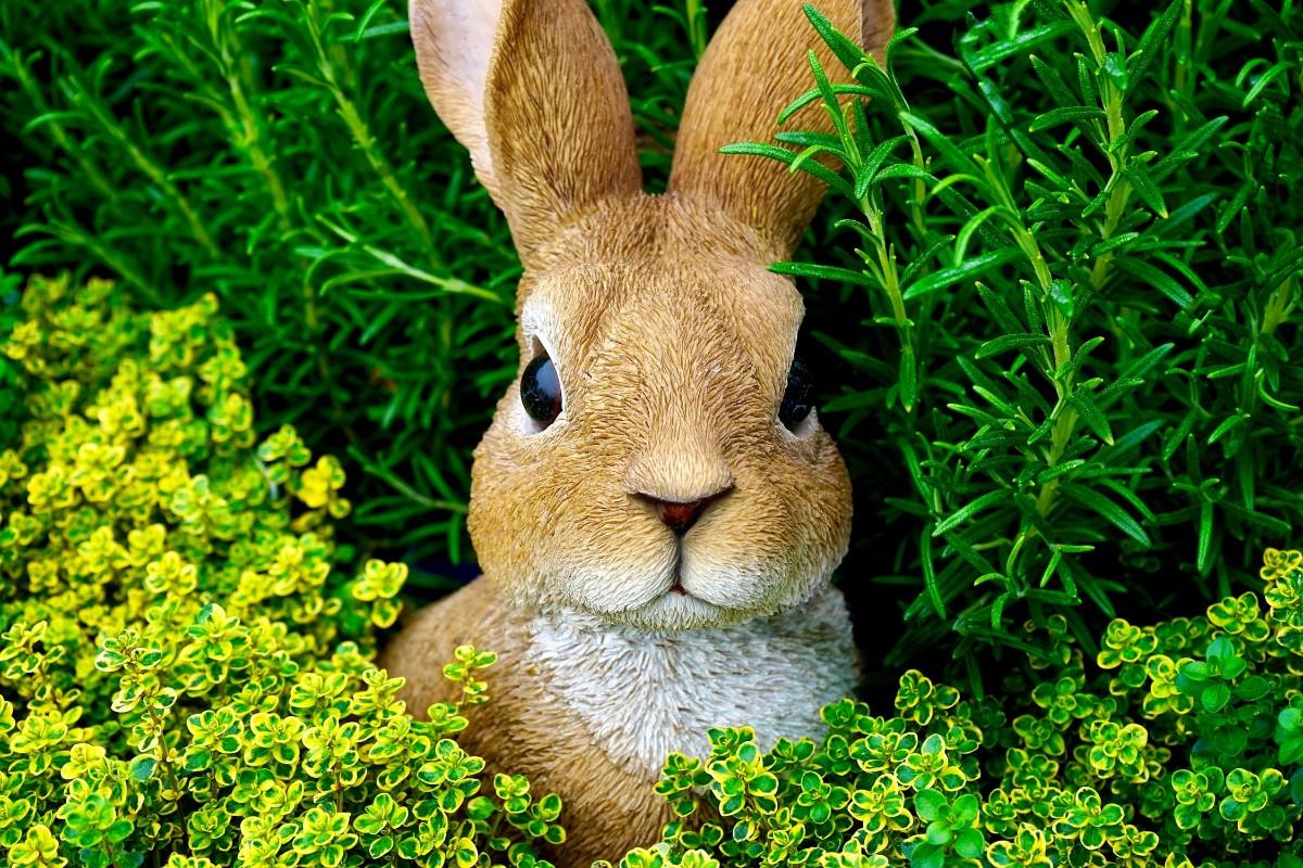 bunny cute ears
