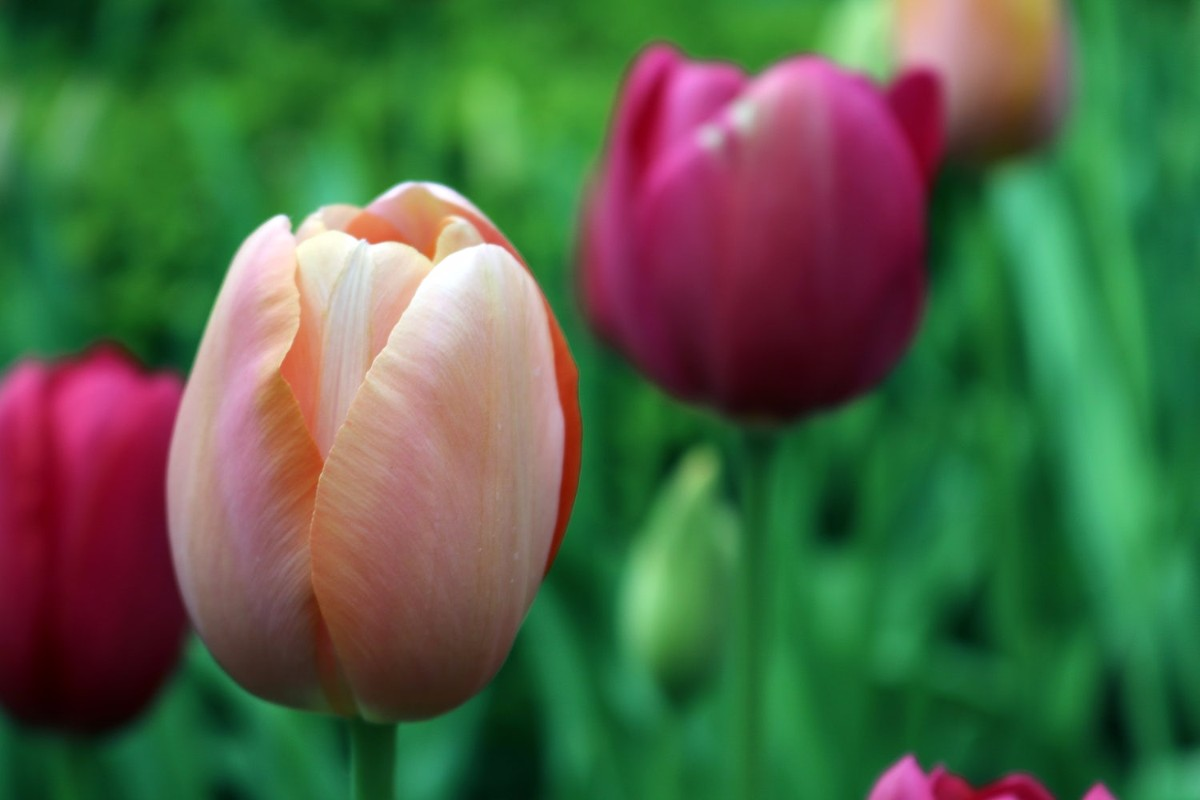 60 Hd Beautiful Easter Wallpapers And Images Mashtrelo
