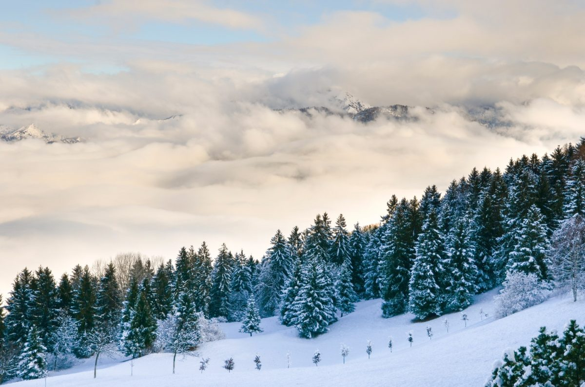 winter backgrounds 06