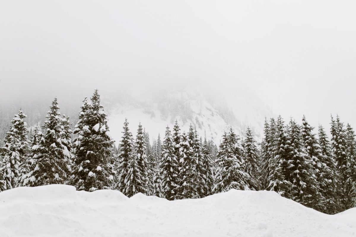 winter backgrounds 12