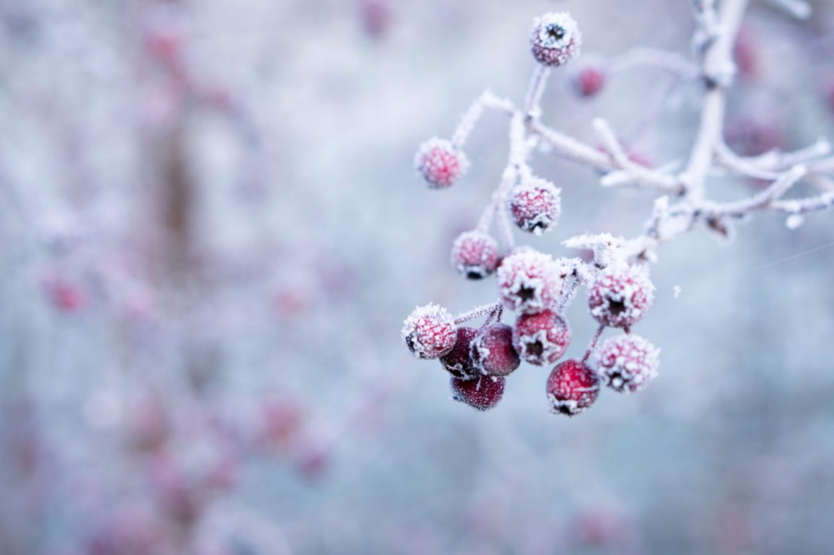 winter backgrounds 19