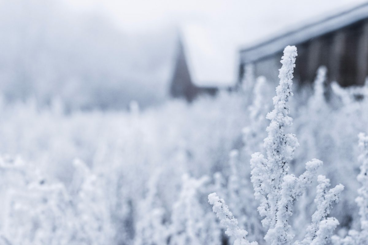 winter backgrounds 29