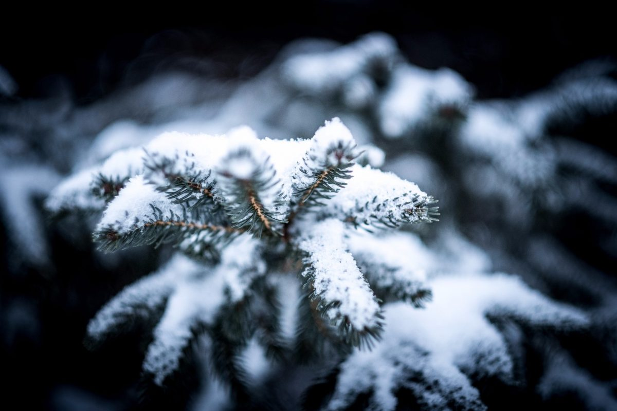 winter backgrounds 35