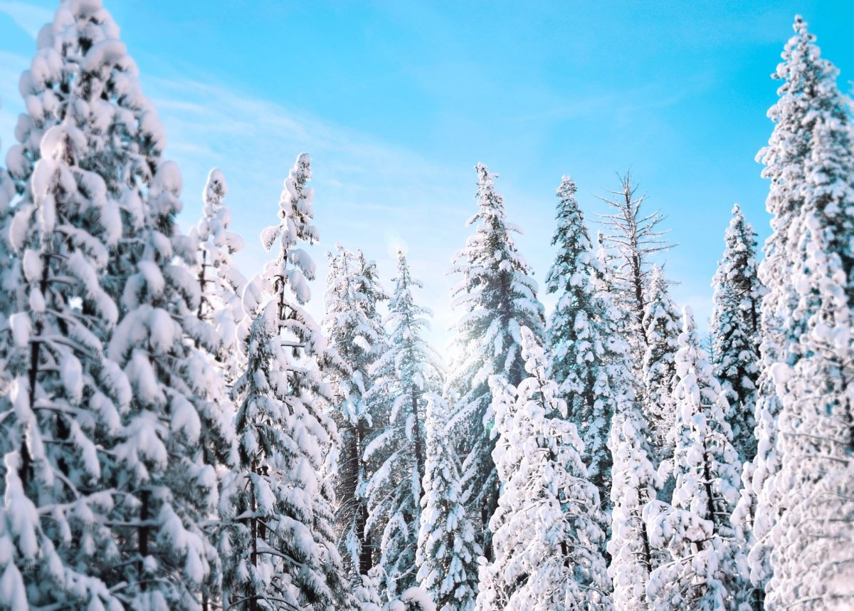 winter backgrounds 42