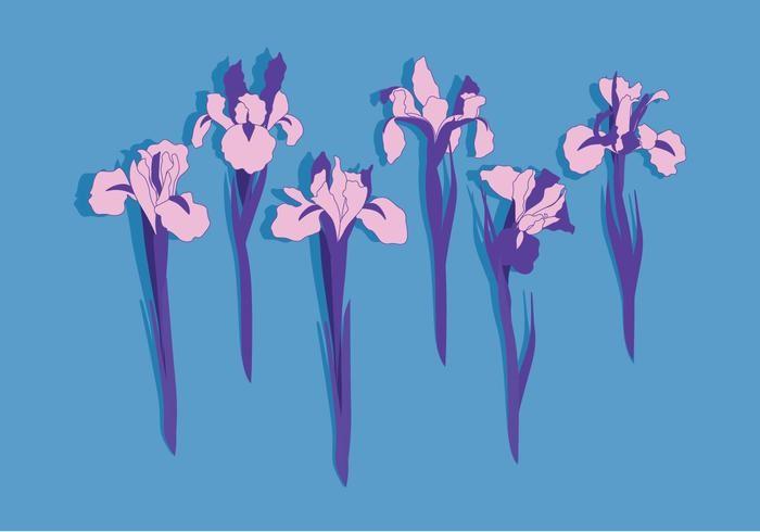 iris-flowers-vector
