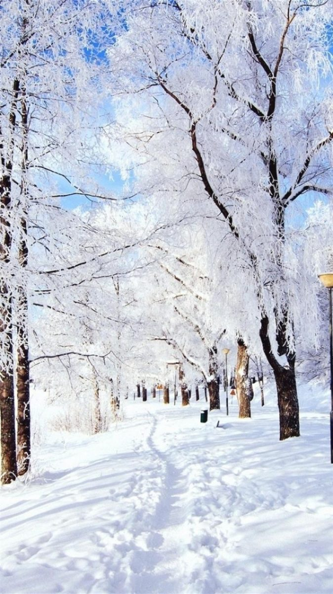 Winter White Trees iPhone Background